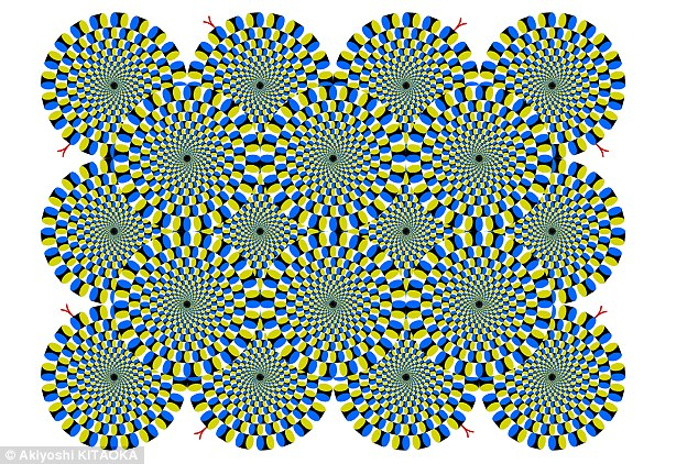 Separate research last year found that zebra fish can see the ' rotating snakes' illusions which tricks the brain into think the patterns are moving, when they are in fact completely still