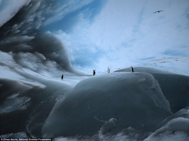 The pictures were taken in Iceberg Alley, a region in the western Weddell Sea.