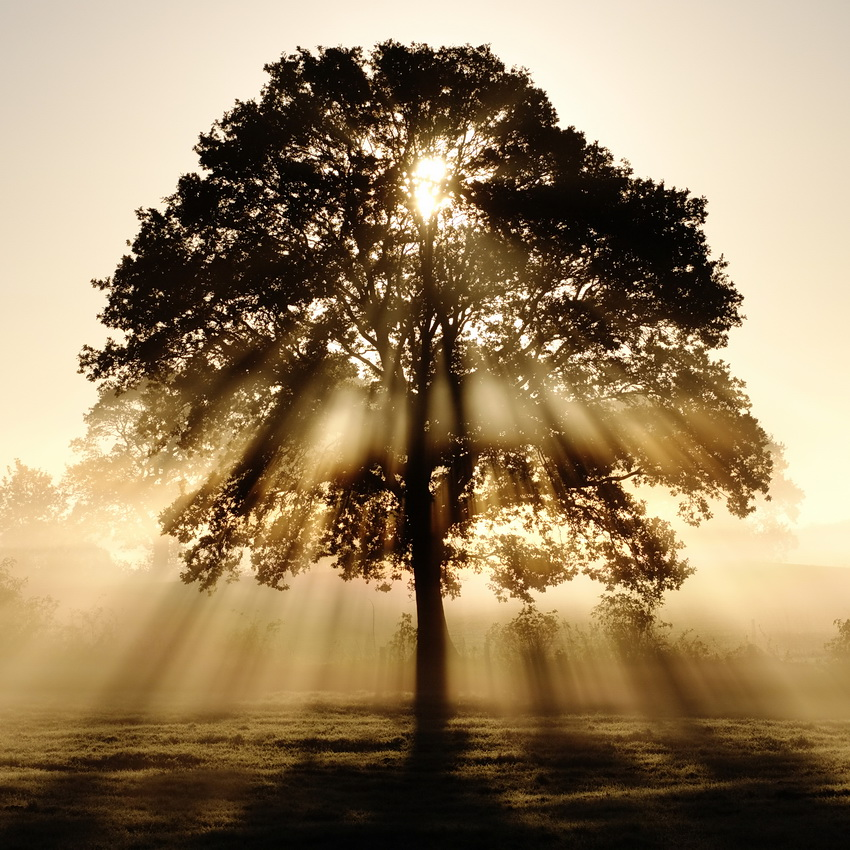 tree with sunlight