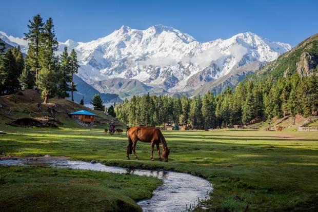 Reforestación Pakistan